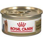 143183-lata-yorkshire-terrier