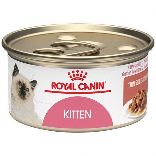143171-lata-kitten--1-