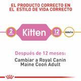 alimento-gatito-fbn-maine-coon-kitten