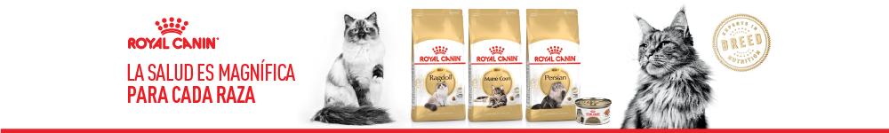 Gatos/Alimento seco